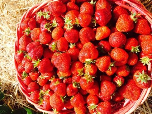 strawberries-359055_960_720