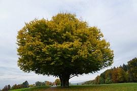 tree-974551__180